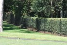 Beaumaris TAS Wire fencing 15